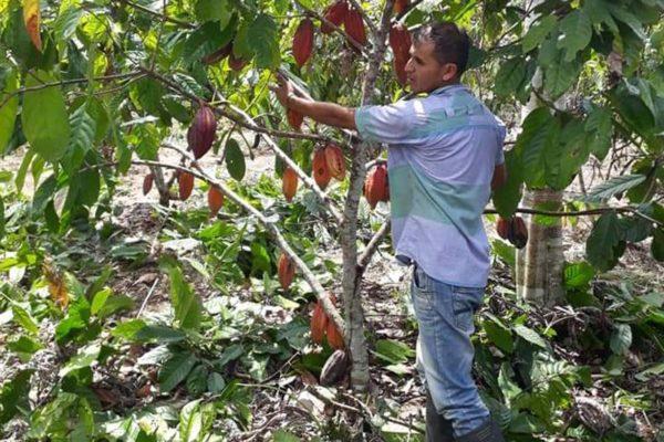 Cacao de Colombie galerie 05